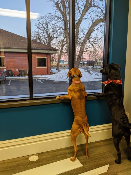 Chiropractic Dogs